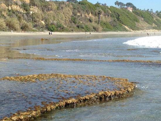 Swami's Beach: tidal beach table