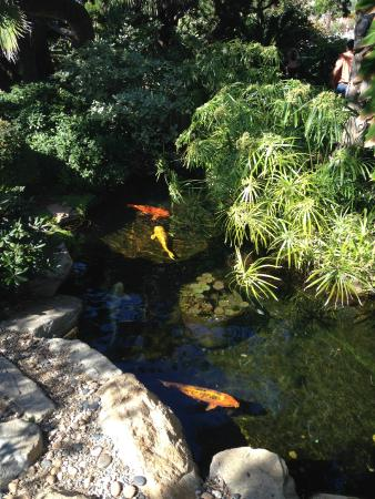 Koi Picture Of Self Realization Fellowship Hermitage