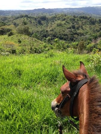 Rancho Lobo Gris : riding up in the hills