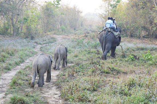 Kaziranga National Park : Elephants ride with them