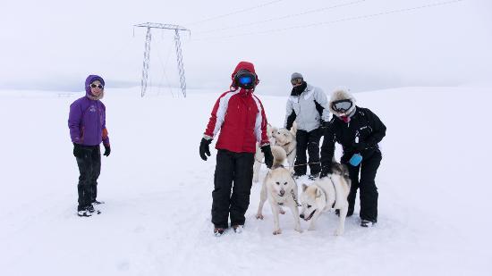 Hotel Glymur: dog sledding