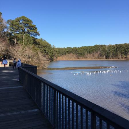 Candlewood Suites Raleigh - Crabtree: Shelly Lake