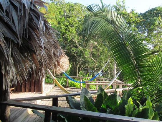 Lamanai Outpost Lodge: View from my cabin/hammock