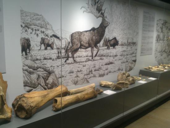 Ambientacion de la epoca: fotografía de Museo de Prehistoria y Arqueologia de...