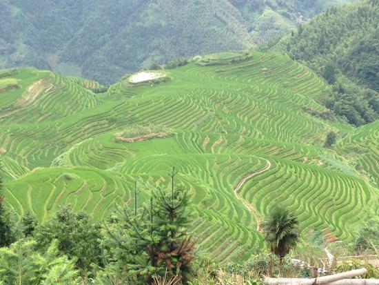 Liqing Hotel: The beautiful rice fields surrounding Ping'an Village