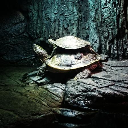SEA LIFE Hannover: Schildkröten