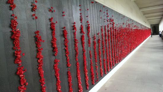 Poppy Flower Field Picture Of Australian War Memorial Canberra
