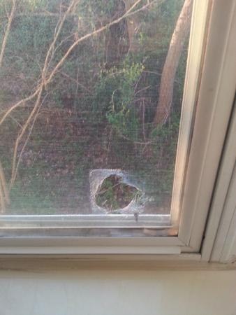 Country Inn & Suites By Carlson, Rock Hill: Hole in screen in room window.