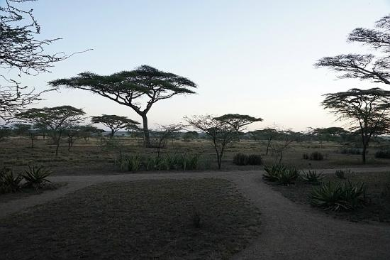 Ndutu Safari Lodge: View from our room