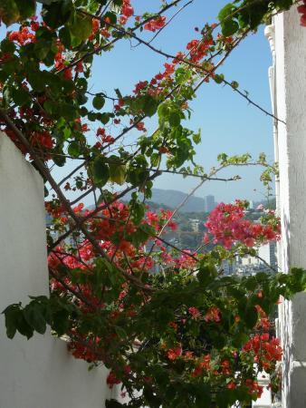 The Villa: outside gardens