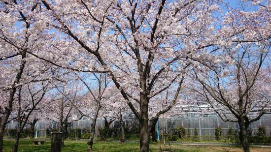 Shirokita Park : 2015.3.30