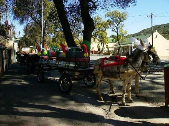 Sanita's: Donkey Taxi