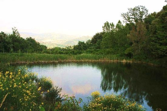 Solfagnano, Italien: One of our 1500-acre estate small lakes