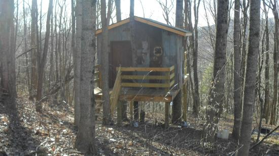 Tree Shack Tree House Is Open Picture Of Buffalo