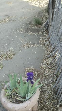 Rancho Los Chabacanos: se miraba que hace meses no limpiaban las instalaciones