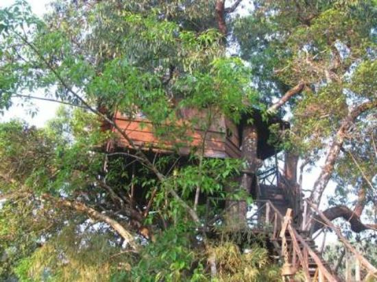 Inside Tree House Picture Of Dandeli Mist Jungle Stay