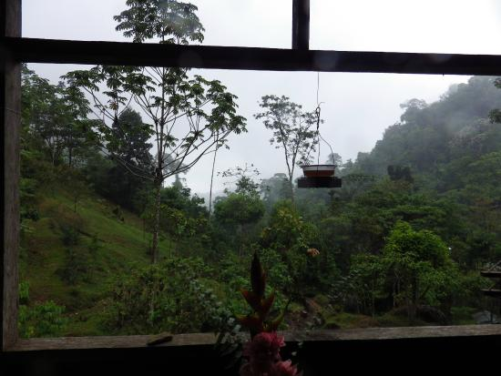 Rambala, Panamá: View from the main lodge.