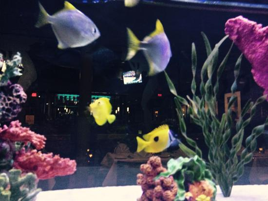 Ocean Club Restaurant: We were seated next to the fish tank