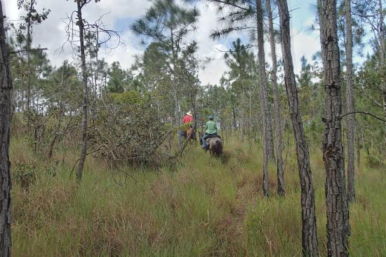 Mountain Pine Ridge Forest Reserve : riding over the top