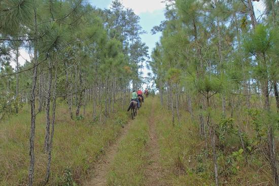 Mountain Pine Ridge Forest Reserve: nobody else around