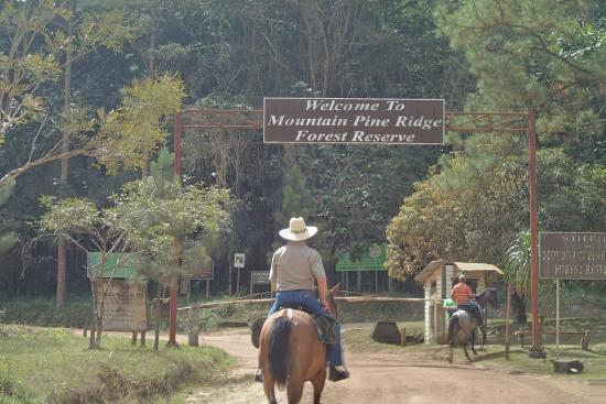 Mountain Pine Ridge Forest Reserve: the entrance and gatekeeper