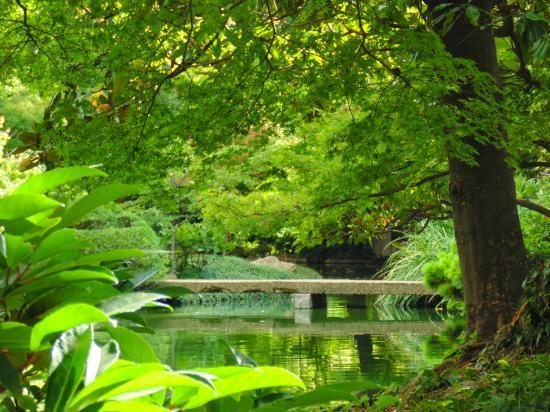 Mid Summer In The Japanese Garden Picture Of Fort Worth Botanic Garden Fort Worth Tripadvisor