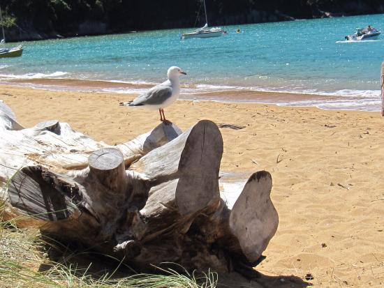 Totaranui Campground: Bird on a log