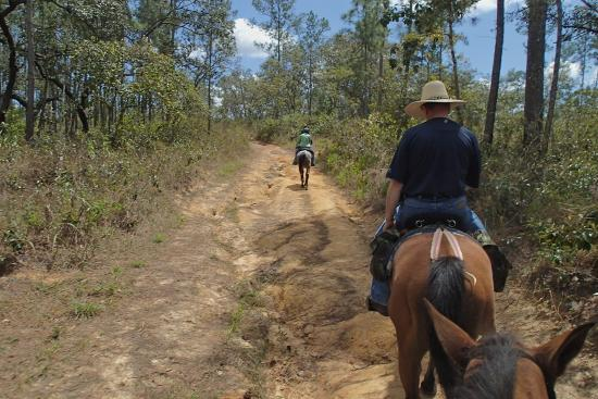 Cayo, Belize: road good for horses not vehicles