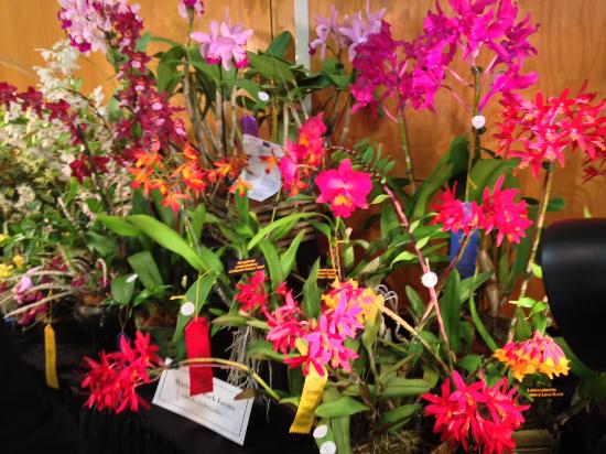 Crooked Oak Mountain Inn : A display of orchids from the WNC Orchid Society Show held at the Arboretum in Asheville.