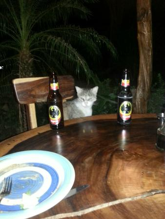 Maxwell's Cafe & Bar: The restaurant cat who joined us!