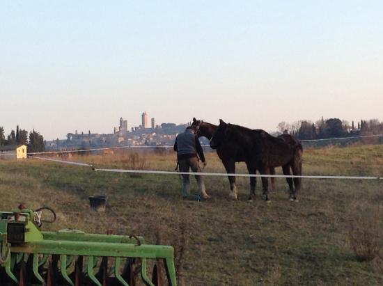 Podere La Marronaia Agriturismo: I cavalli del podere pascolano guardando le torri !
