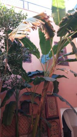Riad Ineslisa: patio riad