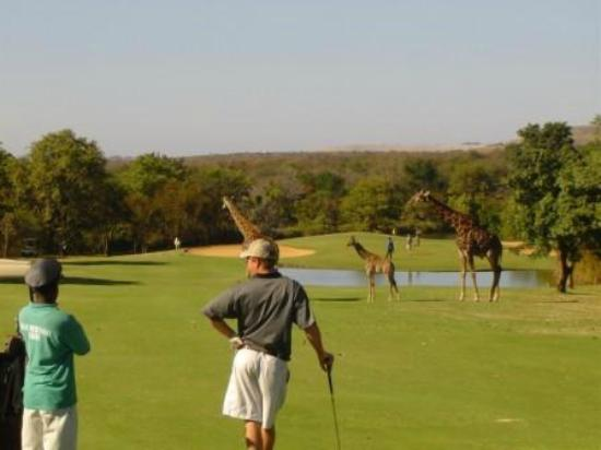 Hans Merensky Hotel & Spa: Golfing