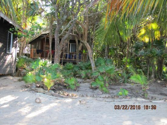 Jungle Jeanie's by the Sea : Our cottage by the sea