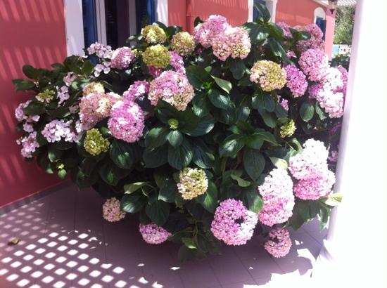 Metohi Georgila: beautiful flowers outside our room
