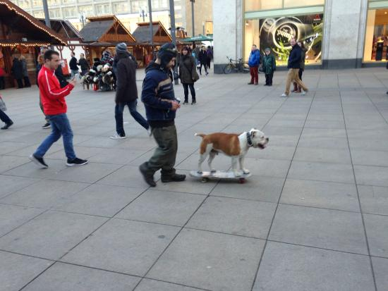 Alexanderplatz: Dog Walking?