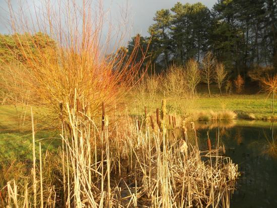 La Cressonnière : automne