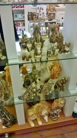 The Cat Gallery: Interior