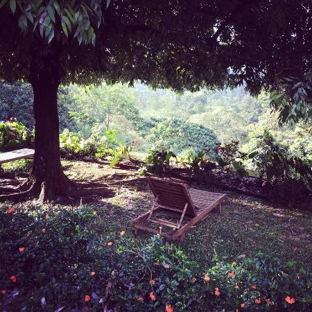 Morawaka Tea Garden Lodge: Garden
