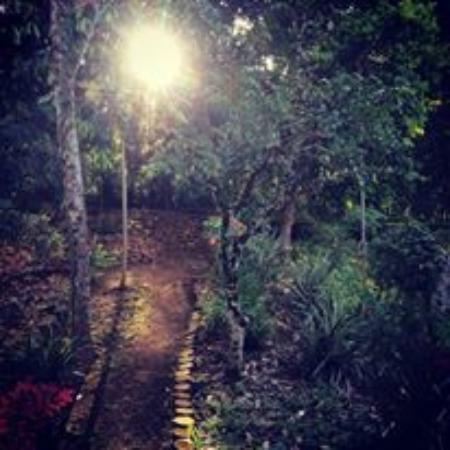 Morawaka Tea Garden Lodge: Graden