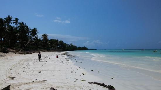 Dream of Zanzibar: Super