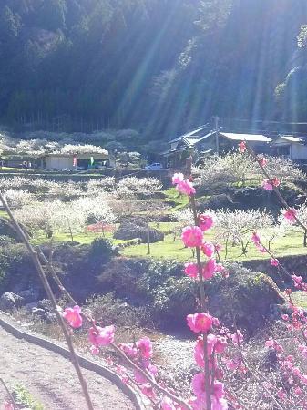 Kaore Plum Garden