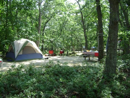Martha's Vineyard Family Campground: Campsite