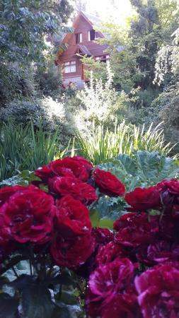 Cabanas Pinotea : Rosales por doquier en Pinotea