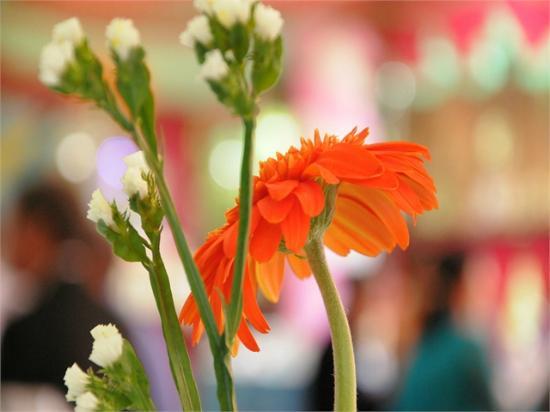 River Ray Estates Resort : Flowers in Garden