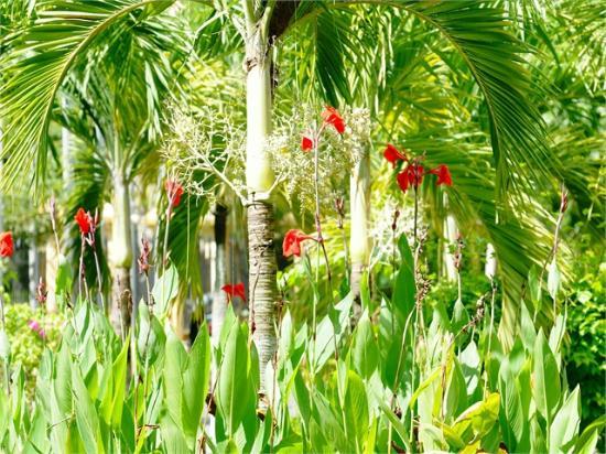 River Ray Estates Resort : Garden View
