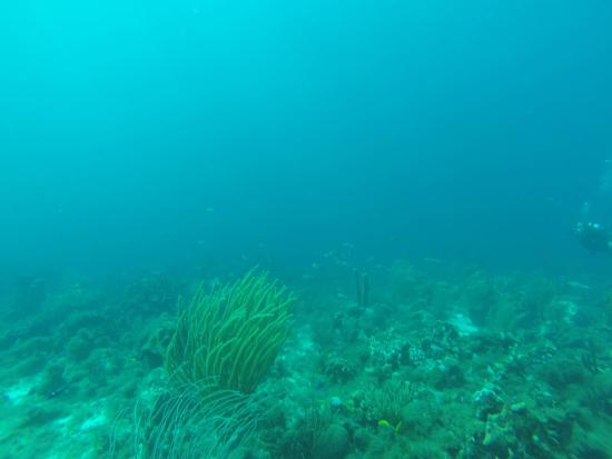 Mushroom Forest with Discover Diving Playa Lagun
