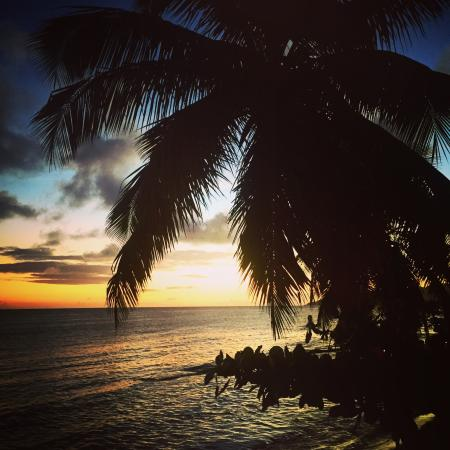 Trade Winds Guesthouse: sunset