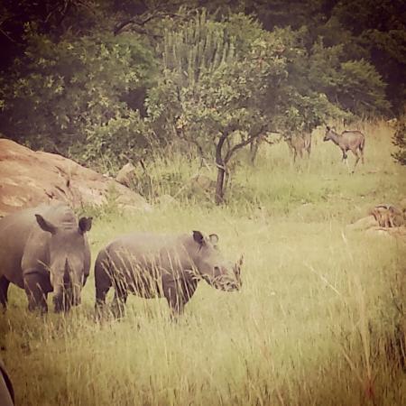 Mpumalanga, South Africa: Nkomazi Game Reserve
