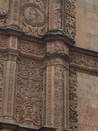 La Rana de Salamanca: La rana, sobre la calavera